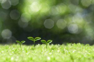 植物は「知性」を持っている その1