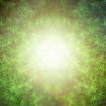 植物は「知性」を持っている その4
