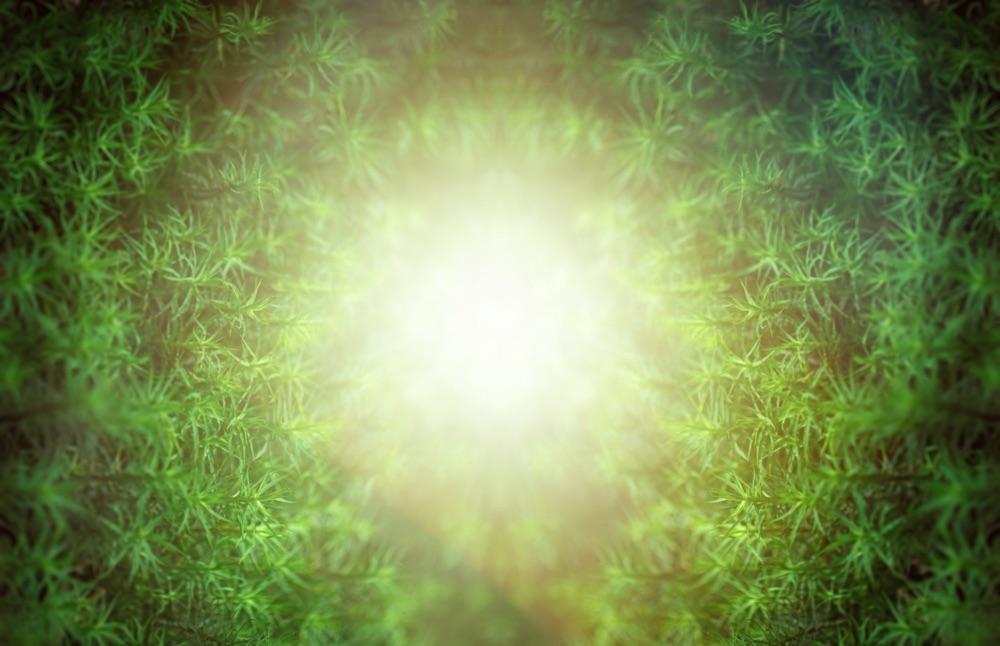 植物は「知性」を持っている