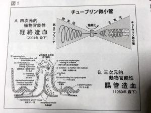 森下学説『二つの造血機能』について