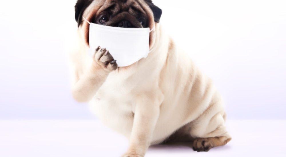 インフルエンザも撃退する!!! 梅干し?